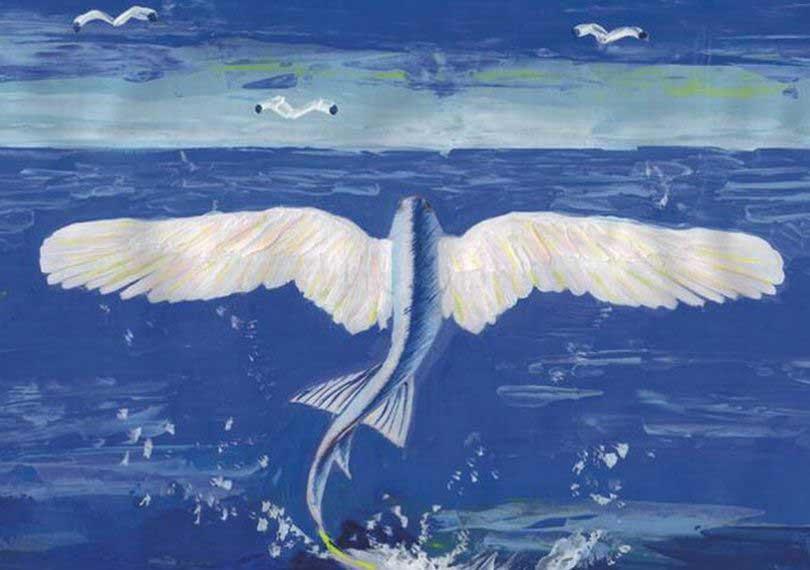 トビウオの翼
